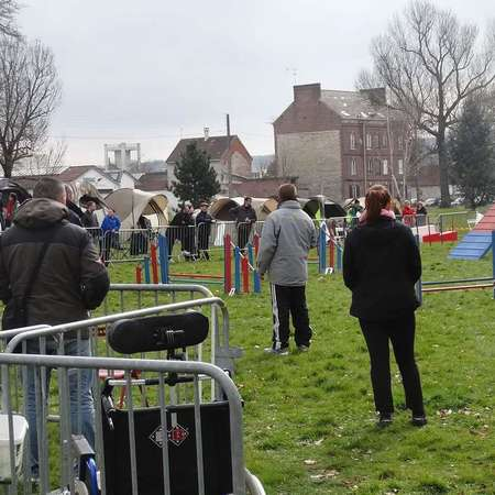 Concours Agility 22 mars 2015